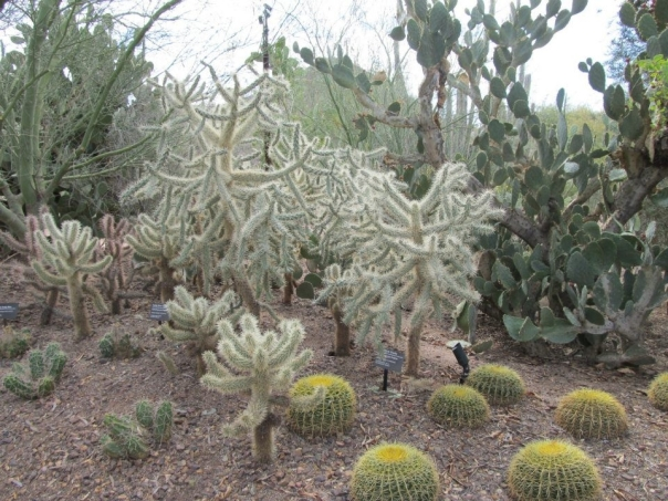 The Desert Botanical Gardens in Phoenix